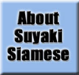 About Suyaki Siamese Cattery